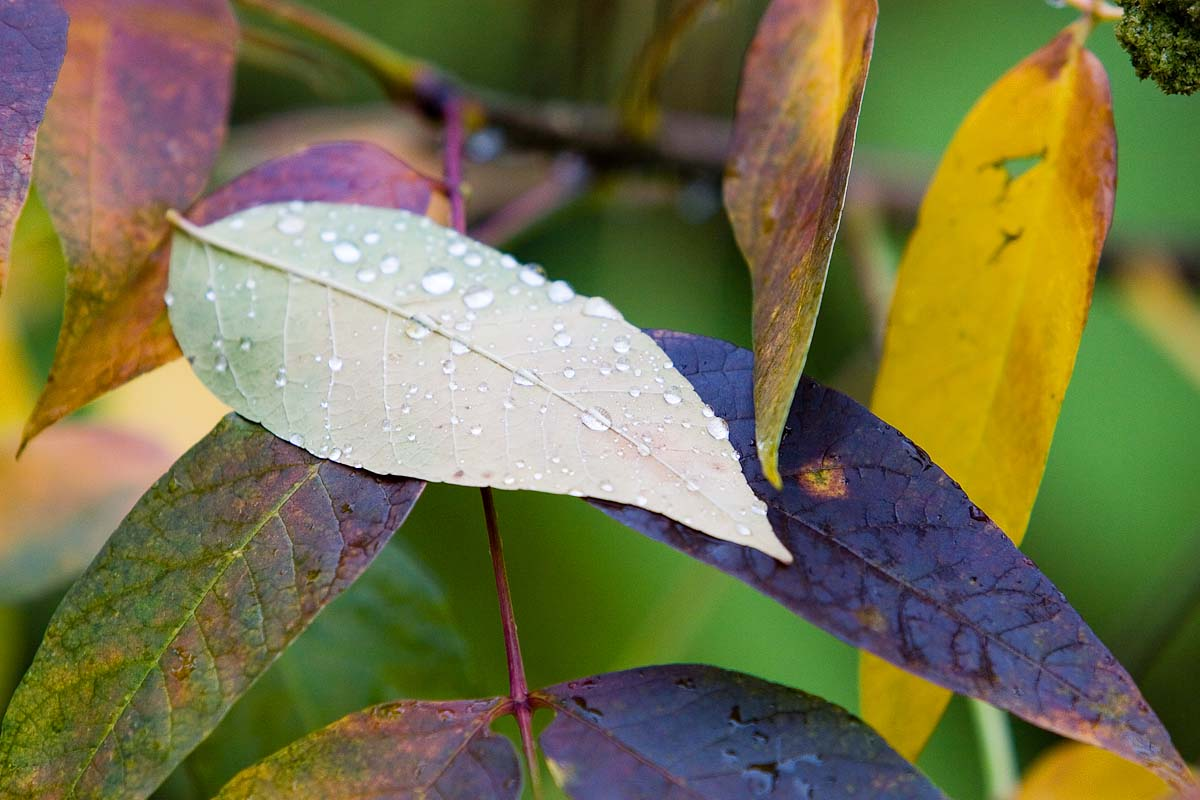 wet_leaves